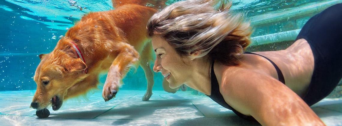 Evcil Hayvan ile Yolculuk