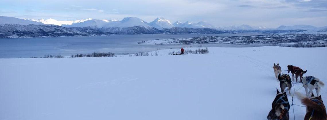 kar kızağı norveç