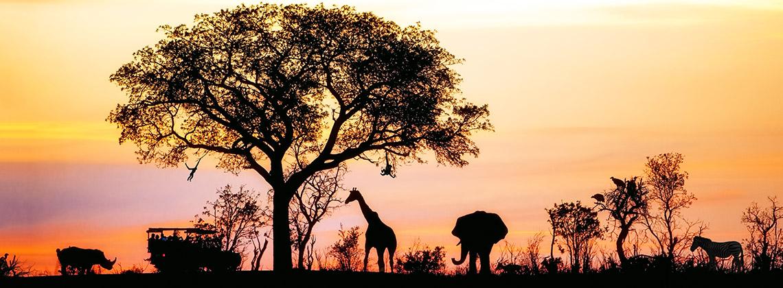 Farklı Türden Hayvanlarla Tanışacağınız Seyahatler