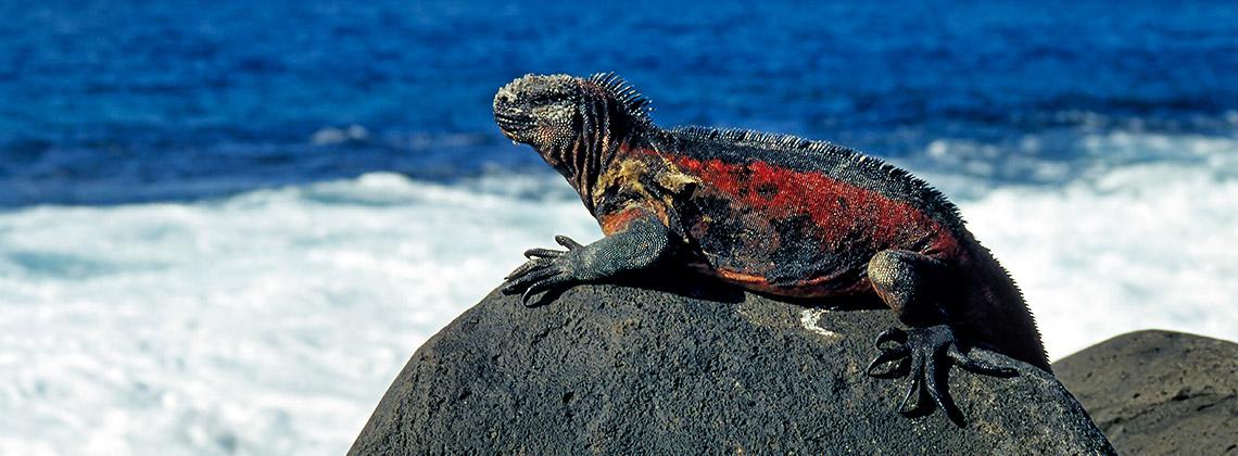 Galapagos Adaları, Ekvador, Pasifik Okyanusu