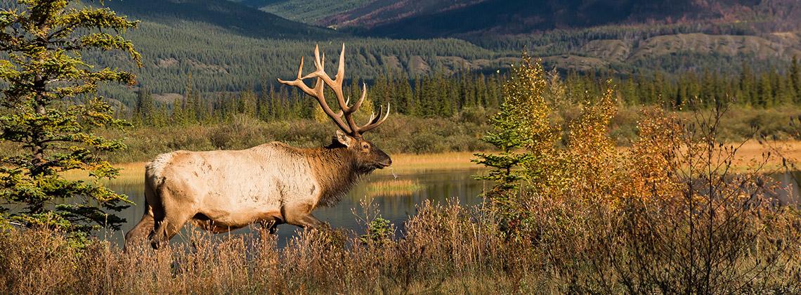 Yellowstone Ulusal Parkı, ABD