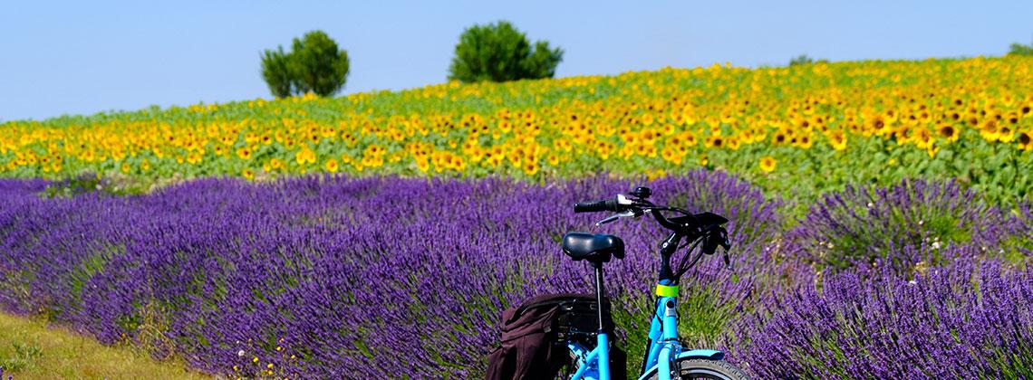 Provence - Fransa
