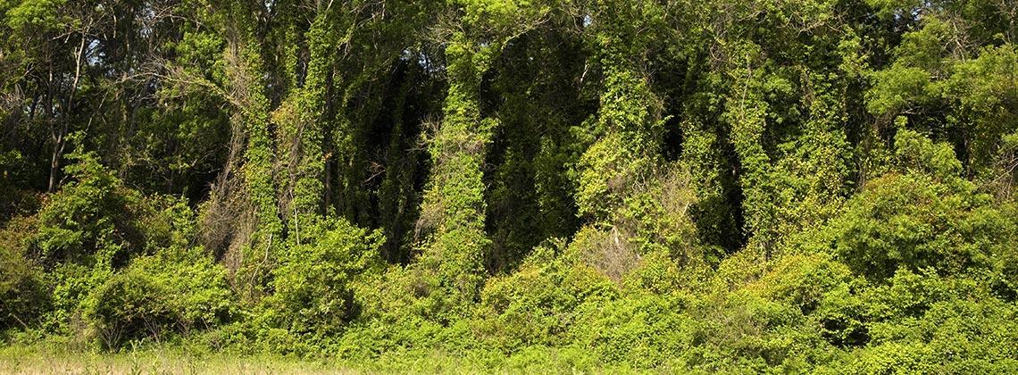 670 Çeşit Bitki ile Benzersiz Bir Ekosistem
