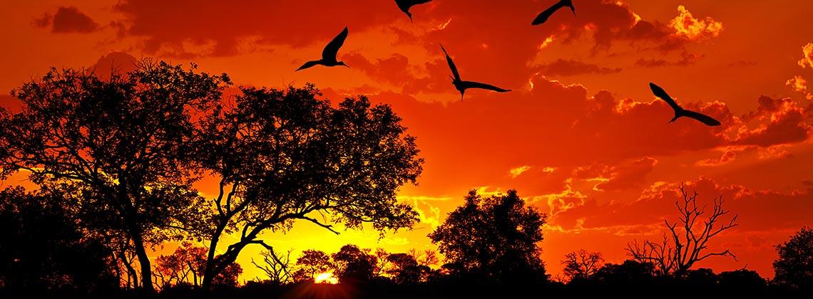 Afrika'nın Kuş Cenneti Kruger