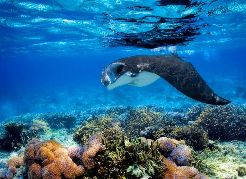 Komodo Adası