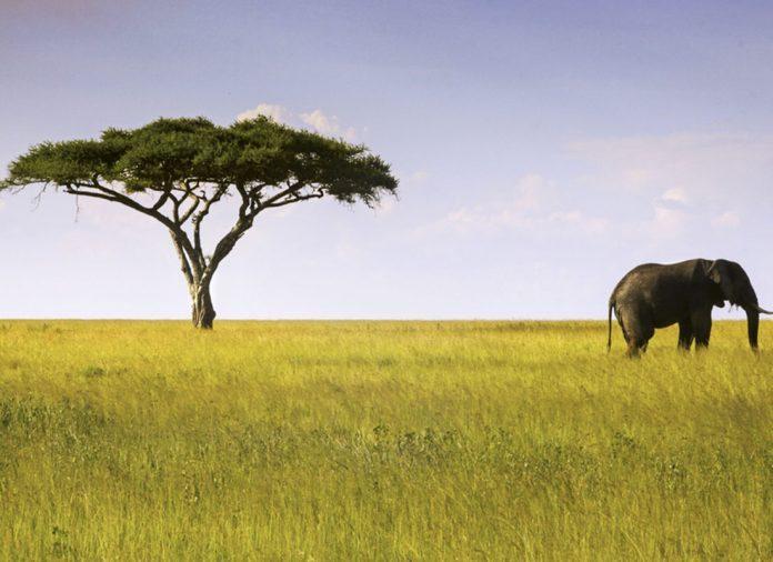 tanzanya serengeti parkı