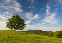 Anıt Ağaçlarla Tarihe ve Doğaya Aynı Anda Tanıklık Etmek